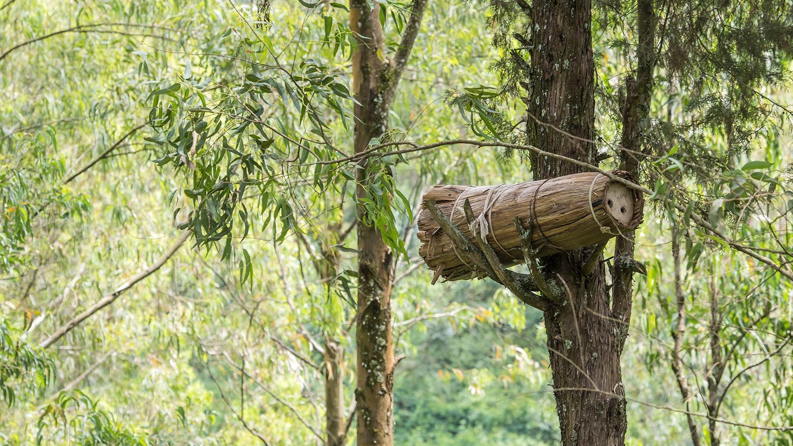 Ruche dans un arbre au Rwanda. © Getty - Guenterguni