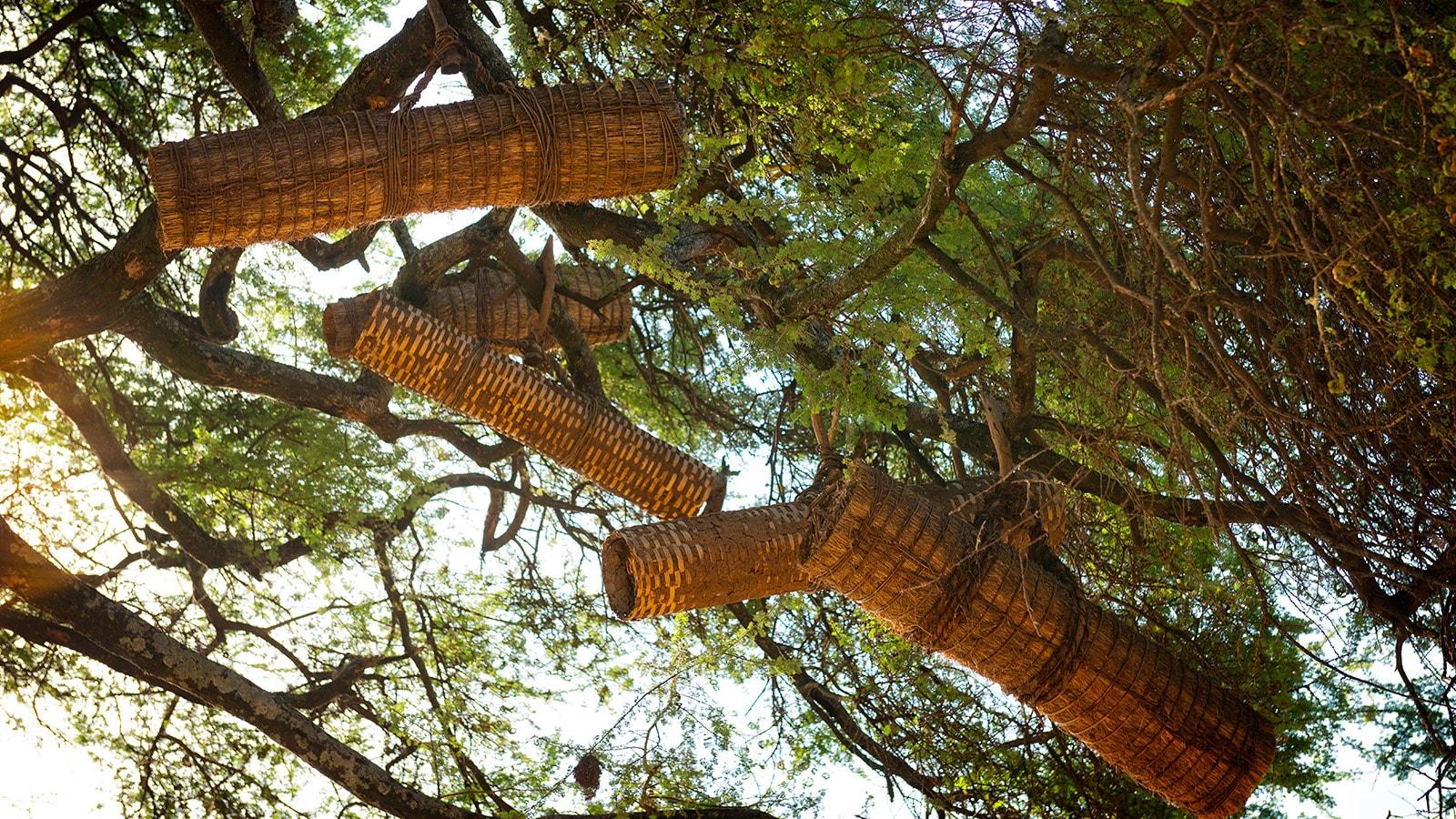 Ruches dans les arbres en Ethiopie. © Getty – Emad Aljumah